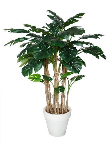 Philodendron Lux 180 cm Green